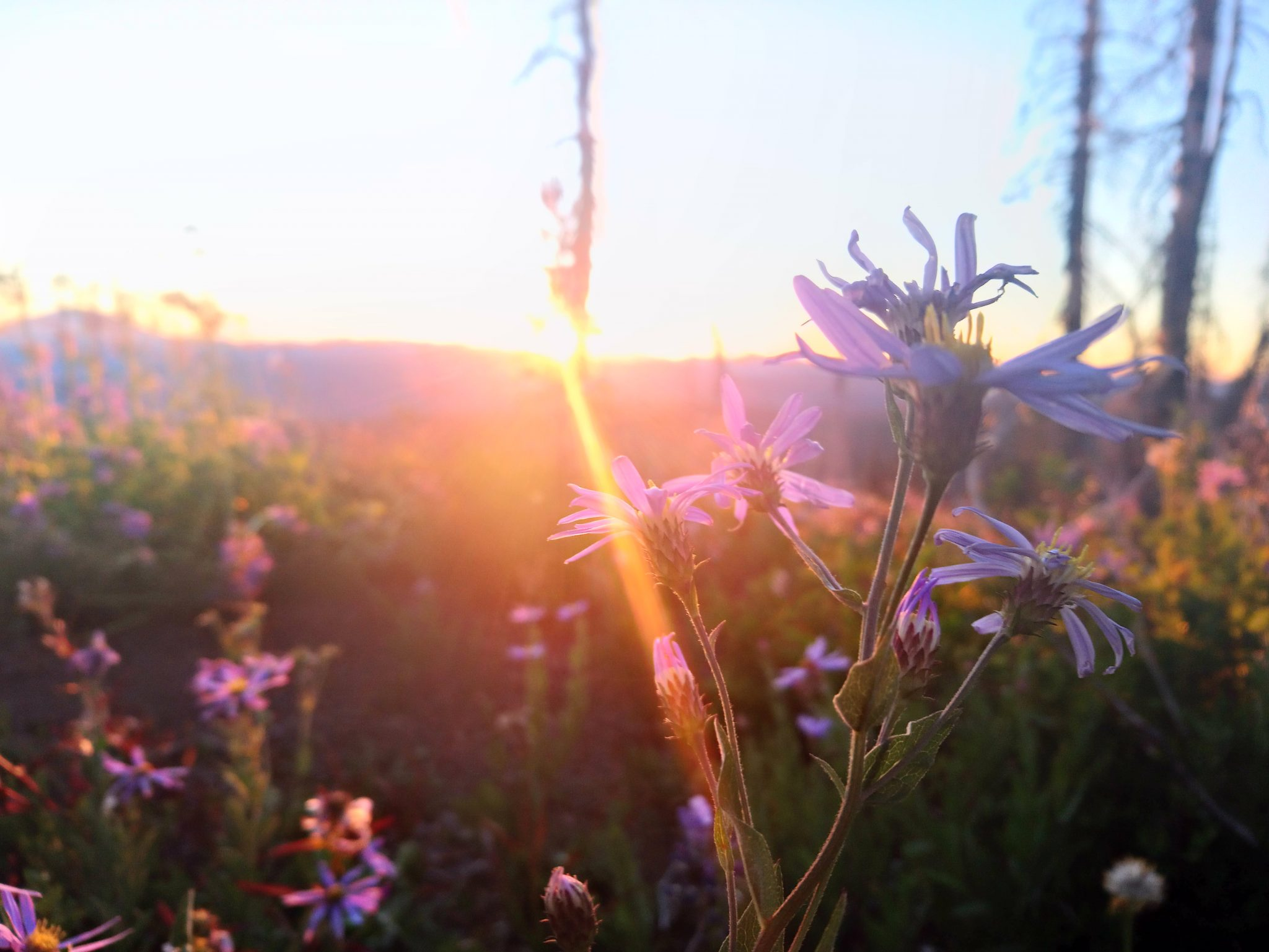 Wildflowers at dusk
