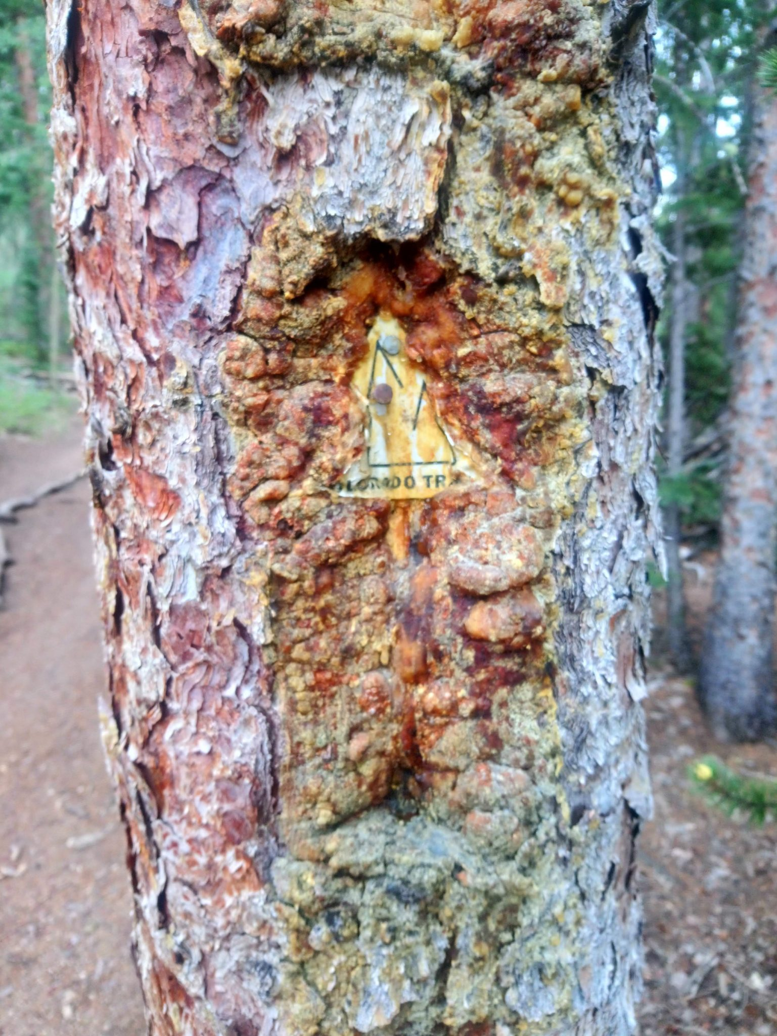Colorado Trail Marker